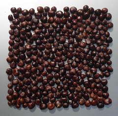 carré (fotosonic73) Tags: marrons carré solaire chaleur accumulation naturel graines marronnier capteur