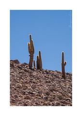 Cactus (BonjourAna_photo) Tags: cactus desert landscape