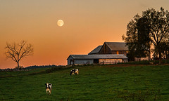 Over The Cowshed (cindiefearnall) Tags: farm moon moonrise moonlight barn rural cows farmland sunset landscape landscapephotography pastoral meafordontario twilight cindiefearnall fullmoon