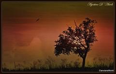Albero di pero in Autunno - Settembre-2018 (Agostino D'Ascoli) Tags: alba pero nikon nikkor cianciana sicilia agostinodascoli texture nature albero cielo art digitalart creative landscape paesaggi