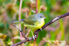 IMG_7130 (nitinpatel2) Tags: bird nature nitinpatel