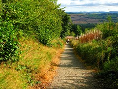 Photo of Bury Ditches Hillfort: looking back down path