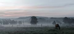 Natur... (st.weber71) Tags: nikon nrw niederrhein natur nebel bodennebel bäume pferde landschaft landscape romantik deutschland d800 morgens tiere animals dunst