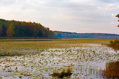 Colorful sunrise in central Pennsylvania. (ABWphoto!) Tags: usa pennsylvania pond bog marsh lake nature leaves autumn colorful woods scenic tranquilscene outdoors plants