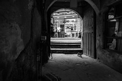the little visitor / small brake for a tea (Özgür Gürgey) Tags: 2018 20mm bw d750 eminönü nikon voigtländer architecture cat door gate old people steps street istanbul lowlight