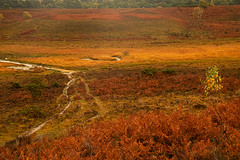 New Forest Autumn Colours (fstop186) Tags: autumn newforest reds golds browns yellow warm stream rivulet water valley forest heather river