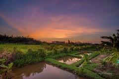 田野夕彩 sunset (Lin Honglin) Tags: tree 田野 田園 台灣 黃昏 夕照 夕陽 天空 雲彩 雲 tokina taiwan color cloud sky sunrise sunset nikond610 nikon