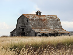 A favourite barn (annkelliott) Tags: alberta canada eofcalgary building architecture barn old wooden rural ruraldecay ruralscene abandoned crumbling weathered field grass sky outdoor fall autumn 12october2018 nikon p900 nikonp900 annkelliott anneelliott ©anneelliott2018 ©allrightsreserved