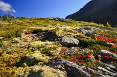 Moss and lichen on the hillside (charlottehbest) Tags: charlottehbest norway scandinavia roadtrip honeymoon 2017 september autumn lofotenislands lofoton exploring fjords nikon nikond5000 d5000