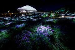 山口ゆめ花博 花の谷ゾーン #3ーYamaguchi Yume Flower Expo Flower Valley Zone #3 (kurumaebi) Tags: yamaguchi 阿知須 山口市 nikon d750 山口ゆめ花博 夜 night yamaguchiyumeflowerexpo reflection きららドーム