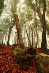 Sunrise in the Misty Woods (johaennesy) Tags: holzwickede kreisunna ruhrgebiet forrest woodland landscape rotten vertical pentaxian pentaxpixelshift pixelshiftresolution leadinglines ambientlight germany nordrheinwestfalen nrw focusstacking