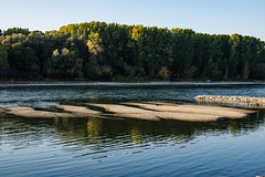 20181015-K32E7565 (AldAsAck1957) Tags: rhine karlsruhe germany low water sunset fall colour