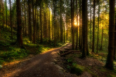 The Forest (Michał.Włodarczyk) Tags: trees sun light rays green path ireland canon