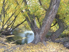 IMG_2823 (August Benjamin) Tags: provo provoriver provorivertrail fall utah mountains provocanyon fallcolors autumn trees leaves orem utahvalley jogging