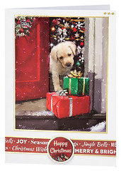 Craft Creations - Shelley174 (Craft Creations Ltd) Tags: puppy greetingcard craftcreations handmade cardmaking cards craft papercraft christmas