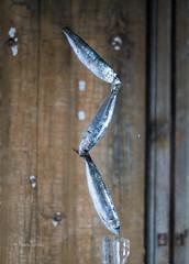 equilibrio imposible - sardinas (manu torras) Tags: equilibrio imposible fish sardinas