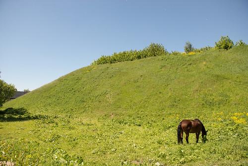 Horse ©  Andrey