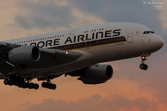 Singapore Airlines (ab-planepictures) Tags: flugzeug singapore airlines airbus a380 lhr egll london heathrow plane aircraft flughafen airport aviation planespotting