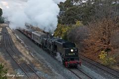 Last Climb (Henry's Railway Gallery) Tags: 6029 ad60class garratt steamlocomotive steamtrain heritagetrain thnsw transportheritagensw passengertrain 6s71 canberra