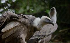 00 DSC_4358 (d_r_o_d_r_i) Tags: basondo urdaibai reserva animal