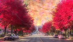 Nanaimo Street (beelzebub2011) Tags: canada britishcolumbia vancouver multipleexposure fallcolor nanaimostreet trees