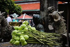 Lotus you will become (Chauxe) Tags: chauxe canoneos canon thailand thailande asie voyage asia travel trip lotus offrande gift offering religious religion religieux bouddhisme bouddhiste boudiste tailandia thailandia tailande
