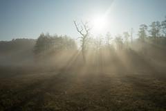 Bosch (17 of 32) (VarsAbove) Tags: kampinos kpn kampinoski park narodowy fog mist mgła morning sunrise dawn wschód polska poland łoś moose sony sonya7 a7ii coffe milkyway