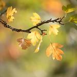 Autumn's gorgeous colour palette thumbnail
