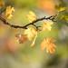 Autumn's gorgeous colour palette