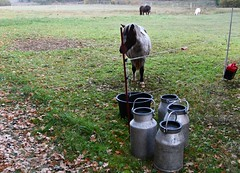 (:Linda:) Tags: germany thuringia village bürden horse four milkchurn pony