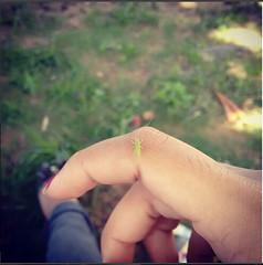 pequeno verde (brigida_paiva) Tags: inseto natureza animal brasil