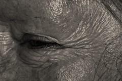 Every Wrinkle Earned (Luke Y.) Tags: ribbet macromondays crinkledwrinkledfoldedorcreased eye face lady elderly old wrinkles lines smiling laughing bw blackandwhite blackwhilte macro closeup