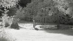 The lonesome bench .... (Elisafox22) Tags: elisafox22 sony a5000 irconverted infrared 850nm sony55210mmtelephotolens 55210mm telephoto lens monochrome park trees branches leaves foliage sliderssunday hss lochsidewalk bench hbm benchmonday fyvie fyviecastle aberdeenshire scotland blackandwhite monotone shadows bw mono greyscale ir elisaliddell©2018