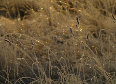 Colourful  Frosty Sparkles..x (Lisa@Lethen) Tags: frost nature weather frosty sparkles field grasses bokeh colourful