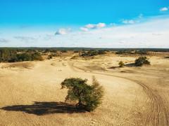Uitzicht over Kootwijkerzand (ome.henk) Tags: herfst veluwe 2018 kootwijk burgers hogeveluwe natuur bomen bos zand dieren