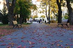A walk in the park (Baubec Izzet) Tags: baubecizzet pentax autumn park nature leaves trees