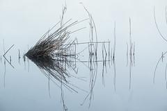 Misty Myall (Wanda Amos@Old Bar) Tags: wandaamos landsacpe minimalism minimalist mist morning reflection sunrise symmetry