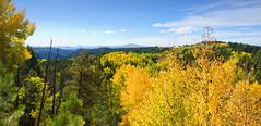 A View across the Treetops, Cripple Creek Colorado (Gail K E) Tags: colorado cripplecreek tellercounty rockymountains frontrange aspentrees usa mountains scenic beautiful southwest
