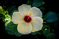 Yellow Beauty V2.0 (NguyenMarcus) Tags: vungtau bàrịa–vũngtàu vietnam vn aasia worldtrekker