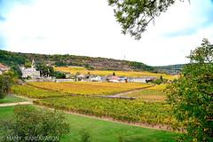 Saint-Aubin et son vignoble (Mamyarason) Tags: extérieur vineyard côtedor vigne régionbourgognefranchecomtéfrance mamyramiarason saintaubin paysage france autumn vignoble automne nikond750 burgundy vignobledebourgogne