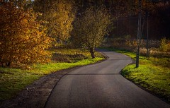 My new place on earth... a new way home & neighbourhood (Ula P) Tags: fall autumn colorful sony sonyalpha green yellow