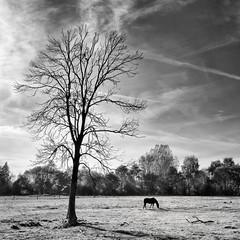 horse tree (SunnzBoz) Tags: 500v20f 1000v40f skancheli