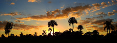 Halloween Sunset (Jim Mullhaupt) Tags: sunset sundown dusk sun evening endofday sky clouds color red gold orange pink yellow blue tree palm outdoor silhouette weather tropical exotic wallpaper landscape nikon coolpix p900 pond lake water reflection manateecounty bradenton florida jimmullhaupt cloudsstormssunsetssunrises panorama photo flickr geographic picture pictures camera snapshot photography nikoncoolpixp900 nikonp900 coolpixp900 halloween
