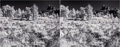 Sagefield IV (turbguy - pro) Tags: 3d crosseye stereo infrared bw medicinebownationalforest