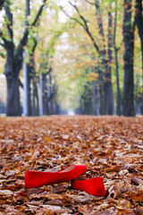 Gone (CoolMcFlash) Tags: red shoes autumn fal alley prater vienna leaves trees dof depthoffield canon eos 60d hauptallee rot schuhe herbst fall allee wien laub blätter bäume baum tiefenschärfe fotografie photography tamron b008 18270 bokeh