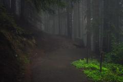 Way Down (Netsrak) Tags: at alpen alps baum berg bäume eu europa europe landschaft natur nebel wald fog landscape mist mountain nature woods