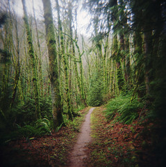 miles to go, part four (manyfires) Tags: film analog holga toycamera plastic forest woods forestpark wildwood wildwoodtrail trail hike hiking outdoors pnw pacificnorthwest oregon portland pdx nature green verdant spring path moss