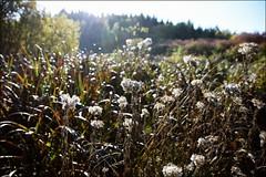 Wet and misty... (Beckerhenning) Tags: nikon d7200 yongnuo 35mm wet misty herbst wiese dickicht sunlight autumn