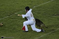 0W3A8385_v1web (PhantomPhan1974 Photography) Tags: ocpca ocpca30thanniversaryk9show gloverstadium anahiem k9 police sheriff canine lawenforcement
