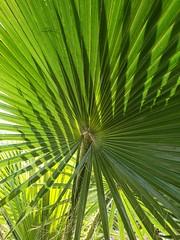 Leaves and shadows (quinn.anya) Tags: leaves green shadow plant jellystonepark